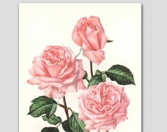 "Rose Art Botanical Print (Vintage Wall Decor, Pink Flower Bedroom, Country Chic Living Room, Cottage Kitchen, 1960s Loft) ""Romantica"" No. 60"