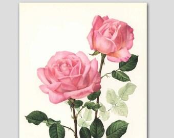 """Pink Flower Art, Rose Print (Vintage Botanical Wall Art, Cottage Chic Home Decor, Pink Bedroom, Garden Kitchen) """"Princess Grace"""" No. 42"""