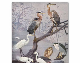 "Heron Print, Bird Wall Art (Vintage Bird Illustration, Antique Bird Decor Gifts) --- ""Blue Herons & White Egrets"" No. 22"