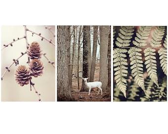 Set of 3 Woodland Wall art, 5x7, Set of Three Nature Photography, Gallery Wall Set, Set of Three prints