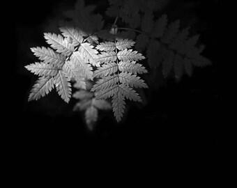 Fern Photo, black and white fern, minimalist art, fern art, Fern photography, Woodland Art, Minimalist Art, Fern Wall Art, Mono, Fern Print