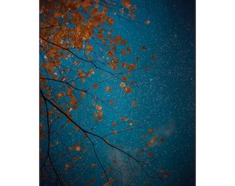 navy blue wall art, navy wall art, dark blue wall art, navy nature wall art, fall tree photos, night sky photography
