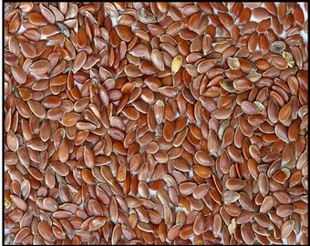 Robs Rareand Giant Seed