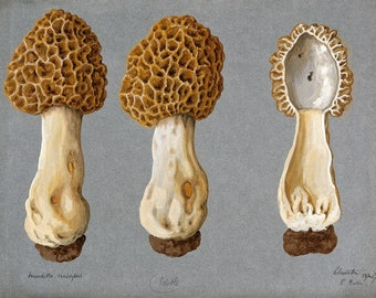Gothic Home Decor   Vintage Oddities Curiosities Oddity Obscure and Weird Wall Art Prints   Nature Botany Fungi Zoology