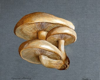 Gothic Home Decor | Vintage Oddities Curiosities Oddity Obscure and Weird Wall Art Prints | Nature Botany Fungi Zoology