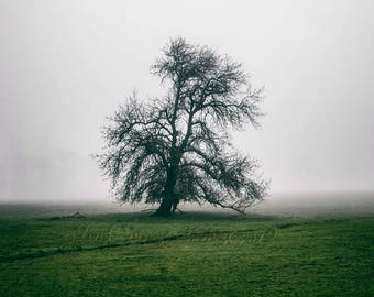 Tree Photography, Rustic Wall Art, Fog Photo, Farm Field, Landscape Photograph, Minimalism Art, Farmhouse Decor, Country Landscape Photo