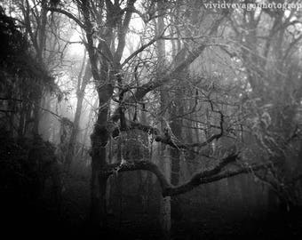 Forest Photograph, Rustic Decor, Fog Photography, Dark Forest Photo, Country Landscape, Tree Photo, Misty Landscape, Nature Photography