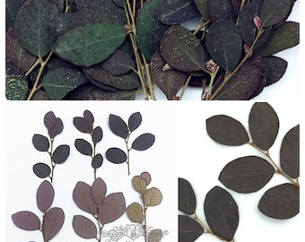 20 PCS (5-8CM) Pressed Real Black Leaves Pressed Flat Flowers Preserved Dry Wildflower Dried Petals preserved greenery Floral Foliage Stems