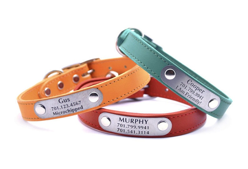 Leather Dog Collar with Laser Engraved Personalized Nameplate image 0