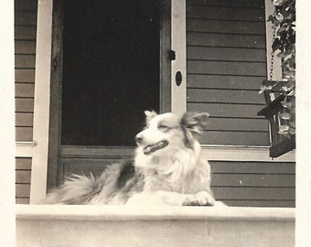 "Vintage Snapshot ""It's A Beautiful Day"" Smiling Dog Lives In The Moment Enjoying Nice Weather Low Angle Photo"