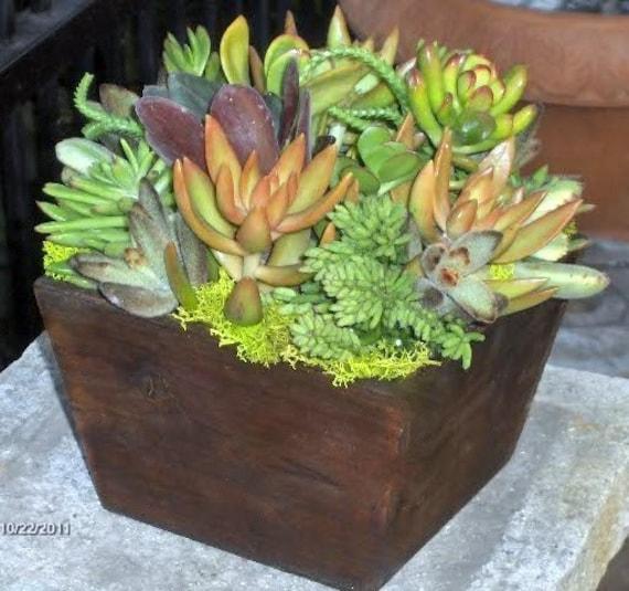 Succulent Centerpiece Succulent Garden Succulent Tabletop | Etsy