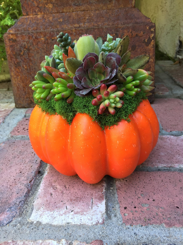 Thanksgiving Succulent Centerpiece Pumpkin Fall Centerpiece Etsy