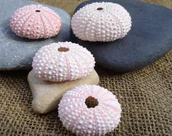 """1""""-2"""" Pink Sea Urchin Shell Perfect for Mounting Tillandsia"""