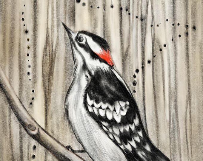Minnesota Woodpecker Card, eco-friendly card