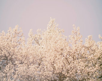 Tree in Bloom Print | Springtime Flowers Photography Muted Toned Wall Art Nature Photography Blue White