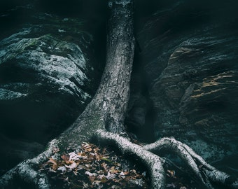 Rooted in Stone Print | Tree Roots Strength Photography