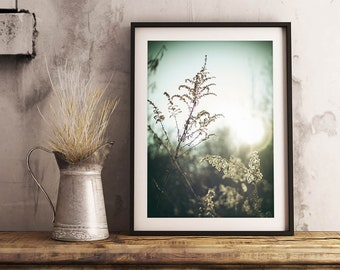 Meadow Goldenrod Print | Detail Sunlight Morning Nature Photo