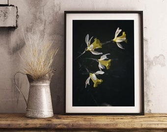 Dramatic Daffodils Print | Springtime Flower Photography Yellow Floral Wall Art