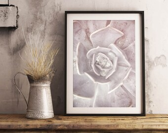 Dreamy Succulent Print | Photography, Soft, Serene, Calming, Landscape, Relaxing, Wall Art, Wall Decor