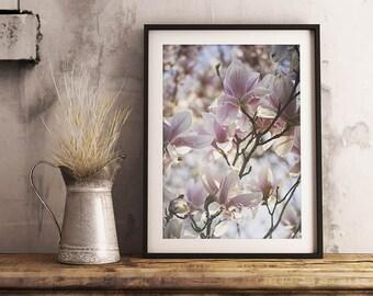 Magnolia Blooms Print | Nature Blush Springtime Light Pink Flower Photography