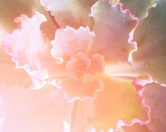Orange Succulent Print | Photography, Soft, Dreamy, Serene, Calming, Landscape, Relaxing, Wall Art, Wall Decor