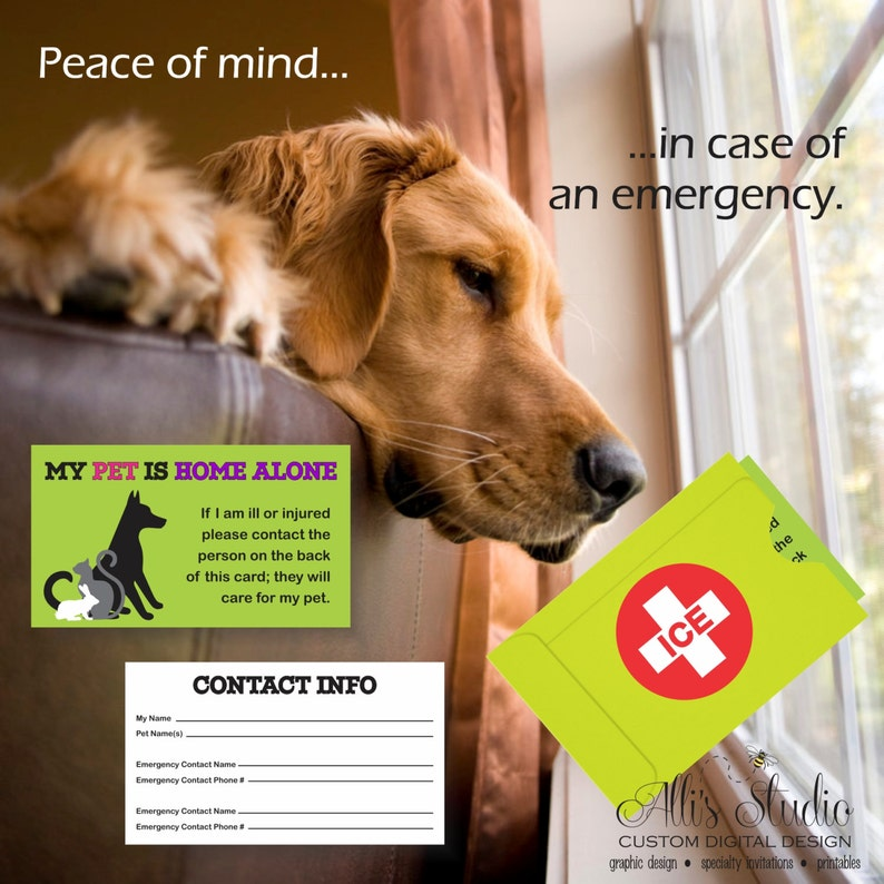 image about My Dog is Home Alone Card Printable titled Puppy Puppy House By yourself Unexpected emergency Identity Speak to Card ICE