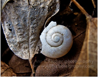 Snail Shell & Leaf Photo, Autumn Nature Photography, Brown Wall Decor, Square Wall Art, Framed Fine Art Photography, Canvas, FREE SHIPPING