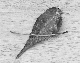 Bird of Leaf and Twig Abstract, Black and White, Zen, Japanese, Miksang, Wabi Sabi, Nature, Minimalist, Framed, Canvas, FREE SHIPPING
