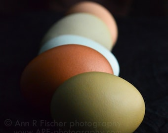 Colorful Eggs in Shadow Photo, Nature Photography, Easter Fine Art Print, Still Life, Easter Gift, Egg Photo, Framed, Canvas, FREE SHIPPING