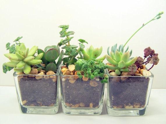 Items similar to Terrarium Succulent planter DIY kit Desk Accessories or Wedding Centerpieces on Etsy