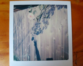 Original Polaroid Art Photo - Reaching For The Shadow Of A Rose - OOAK