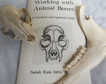 RESERVED Working with Animal Bones - 20 Booklets