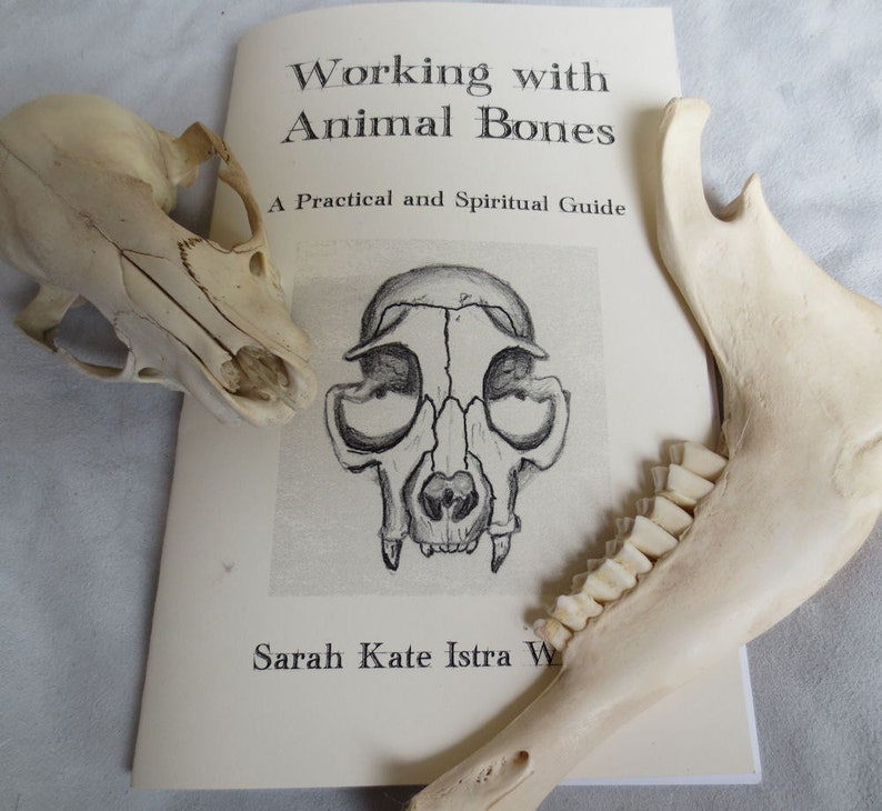 Working with Animal Bones  Booklet  A Practical and image 0