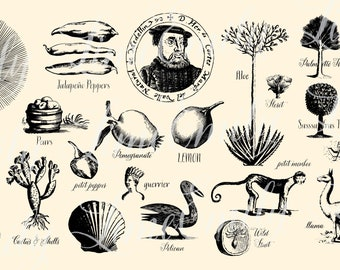 SVG Vector Pack of Vintage Illustrations -Shells Fruit Animals Sun Rays Plants Fish Ship Bird Unique