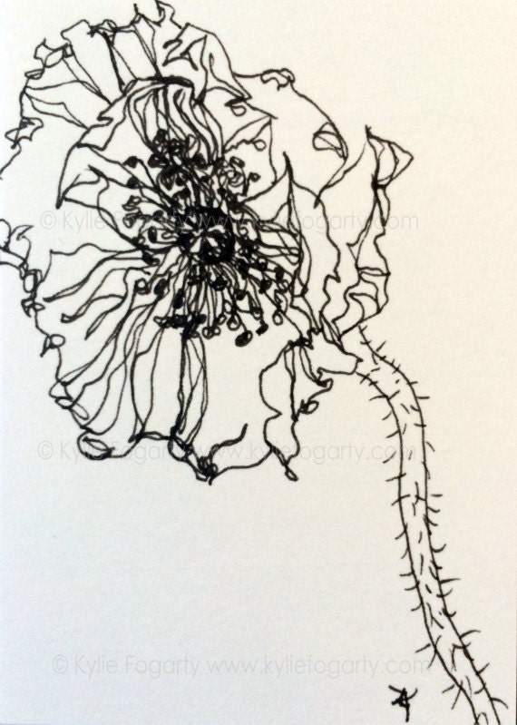 Black And White Open Poppy Flower Drawing Sfa Aceo Fine Etsy