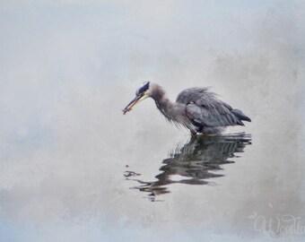 Heron photograph,bird photo,blue heron wading,heron fishing,coastal decor,seabird photography,wildlife picture,birdlife photograph,blue,grey