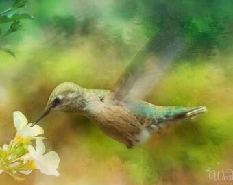 Hummingbird in flight photograph,nature photography,textured photo art,bird photography,nature art print,dreamy,gift art,wildlife photograph