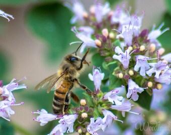 Bee photography,bee on flower image,honeybee photo,macro insect photo,bee print,whimsical image,bee art,standing bee photo,closeup bee photo