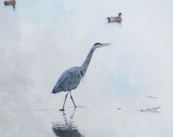 Heron photograph,bird photo,blue heron wading in calm water,coastal decor,seabird photography,wildlife picture,birdlife photograph,blue,grey