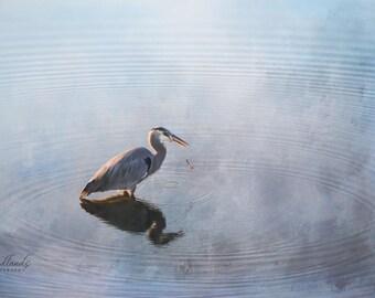 Blue heron fishing in ocean,heron photograph,bird photo,blue heron wading,coastal decor,wildlife picture,birdlife photograph,gift art