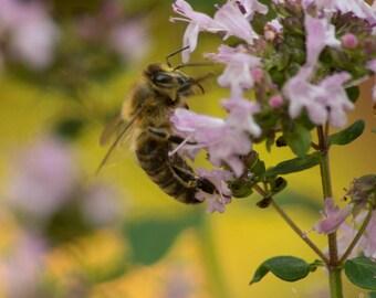 Honeybee photography,bee photo,macro bee photograph,insect photograph,bee print,whimsical image,bee art,closeup bee photography,gift art