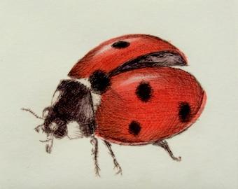 Ladybug print. Seven Spot Ladybird hand tinted drypoint print.