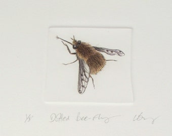 Limited edition drypoint of a rare bee fly. Insect artwork