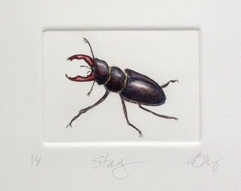 Stag Beetle. Hand tinted drypoint print