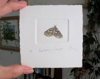 Rare moth. Hand printed and hand tinted mini edition. Barberry Carpet Moth.