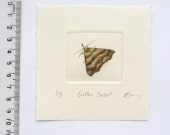 Mini print of a wee moth. Button snout moth drypoint original
