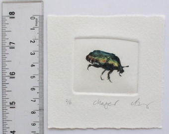 Iridescent green beetle. Hand tinted drypoint pint