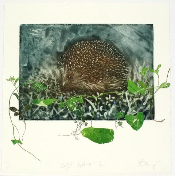 Full colour intaglio monoprint. Silk aquatint or silk mezzotint Hedgehog artwork