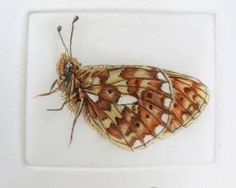 Pearl Bordered Fritillary drypoint print. Rare Butterfly