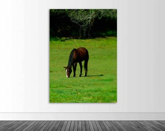 Horse Wall Mural, Equestrian Photography, Vinyl Wall Decal, Wall Sticker, Farm Photo, Infinite Graphics, Photo by Abby Smith, Horse Photo